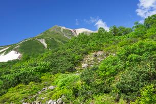 ナナカマドと乗鞍岳の写真素材 [FYI03187900]