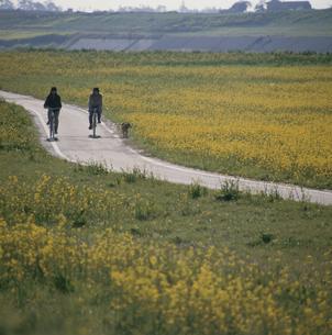 花畑の道をサイクリングするカップルの写真素材 [FYI03188839]