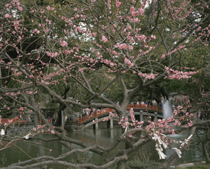 太宰府天満宮   福岡県の写真素材 [FYI03188855]