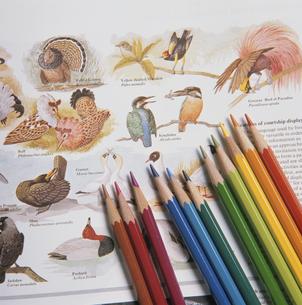鳥の図鑑と色えんぴつの写真素材 [FYI03188884]
