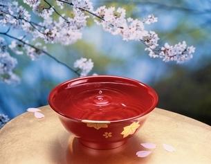 桜と盃の写真素材 [FYI03188929]
