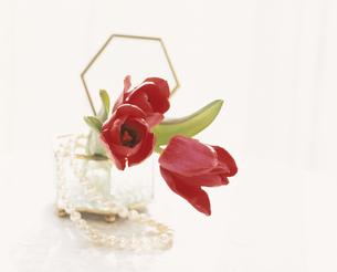赤いチューリップと真珠のネックレスの写真素材 [FYI03189348]