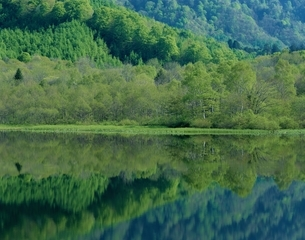 新緑の戸隠鏡池 長野県の写真素材 [FYI03189698]