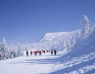 スキーをする人々  蔵王 山形県の写真素材 [FYI03189718]