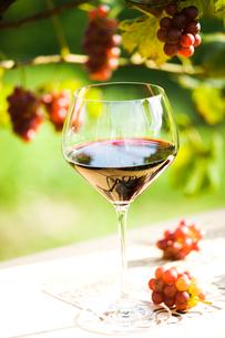 赤ワインとブドウの木と実の写真素材 [FYI03190870]