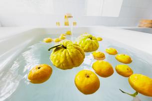 シシユズとユズの柚子風呂の写真素材 [FYI03190909]