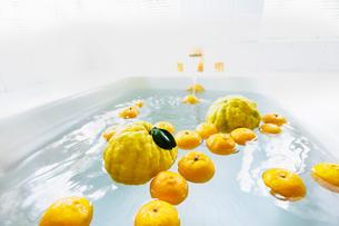 シシユズとユズの柚子風呂の写真素材 [FYI03190929]