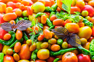 採れたてのトマトとシシトウの写真素材 [FYI03190939]