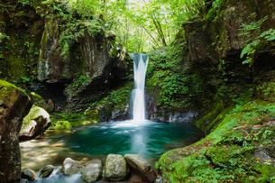栃木県 おしらじの滝の写真素材 [FYI03191138]