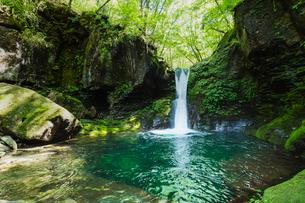 栃木県 おしらじの滝の写真素材 [FYI03191141]