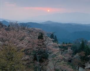桜の吉野山夕景   奈良県の写真素材 [FYI03191960]