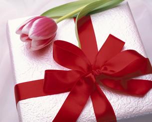 赤いリボンのギフトボックスとピンク色のチューリップの写真素材 [FYI03192015]