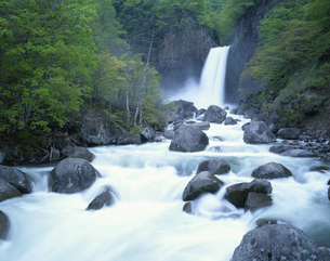 新緑の苗名滝  新潟県の写真素材 [FYI03192166]