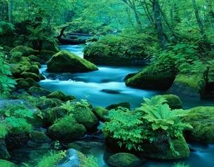 新緑の奥入瀬渓流 十和田湖町 青森県の写真素材 [FYI03192183]
