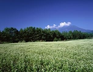 ソバ畑と木曽御岳山   長野県の写真素材 [FYI03192204]