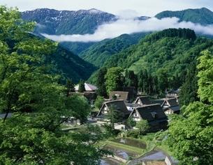新緑の相倉合掌集落   富山県の写真素材 [FYI03192289]
