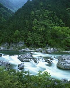 新緑の飛騨川  岐阜県の写真素材 [FYI03192294]