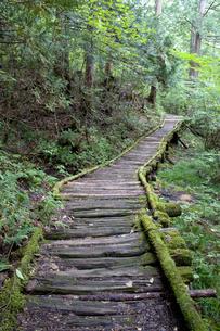桧の森の木道 赤沢自然休養林の写真素材 [FYI03192580]