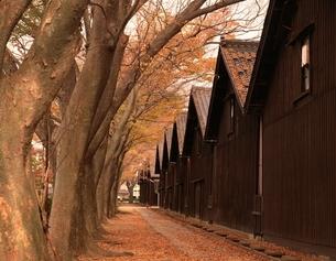 山居倉庫とけやき並木  酒田市 山形県の写真素材 [FYI03192775]