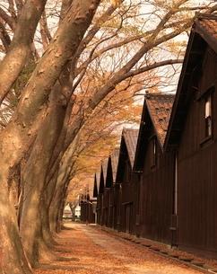 山居倉庫とけやき並木  山形県の写真素材 [FYI03192782]