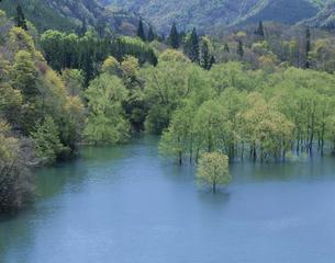 美山湖の白神山地の風景 西目屋村 青森県の写真素材 [FYI03192800]