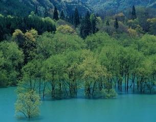 白神山地山麓美山湖    西目屋村 青森県の写真素材 [FYI03192824]