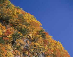紅葉した山と青空 秋田の写真素材 [FYI03192889]