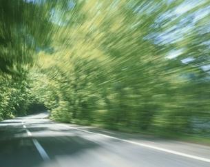 十和田の新緑の森の風景 青森県 秋田県の写真素材 [FYI03192890]