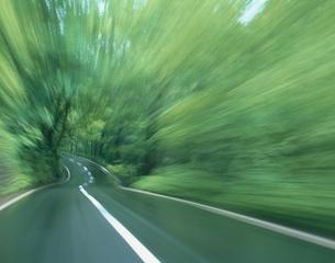 緑の森の道    十和田 青森・秋田県の写真素材 [FYI03192897]