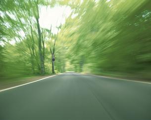 十和田湖の緑の森の道 青森・秋田県の写真素材 [FYI03192903]