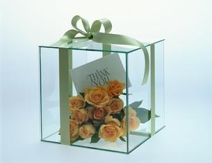 ガラス箱とバラの花の写真素材 [FYI03193209]