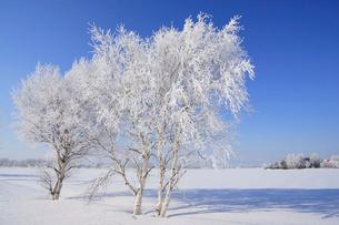 霧氷の写真素材 [FYI03194007]