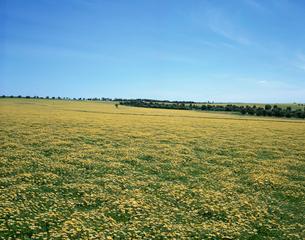 ワイルドフラワーの咲く丘の写真素材 [FYI03194087]