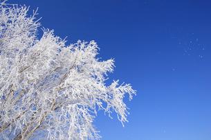 霧氷の写真素材 [FYI03194133]