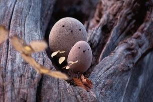 石の鳥の写真素材 [FYI03194142]