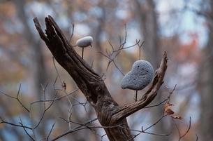 石の鳥の写真素材 [FYI03194147]