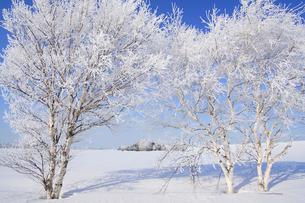 霧氷の写真素材 [FYI03194233]
