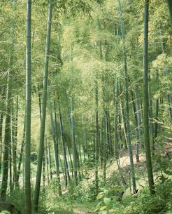 竹林の写真素材 [FYI03194564]