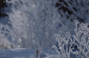 樹氷とダイヤモンドダスト 富良野 北海道の写真素材 [FYI03194609]
