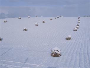 初雪の丘と豆殻 北海道の写真素材 [FYI03194650]