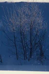 樹氷とダイアモンドダスト 上富良野 北海道の写真素材 [FYI03194679]