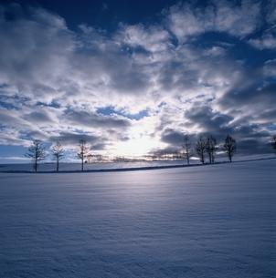 カラマツの並木と雲と雪原の風景 美瑛町 北海道の写真素材 [FYI03194732]