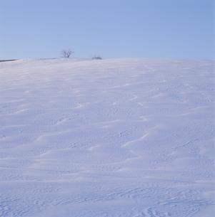 雪紋の丘の風景(白) 冬 美瑛町 北海道の写真素材 [FYI03194742]