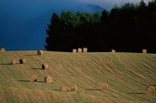 牧草ロールの丘の風景 美瑛町 北海道の写真素材 [FYI03194753]