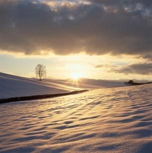 日の出と白樺   美瑛 北海道の写真素材 [FYI03194780]