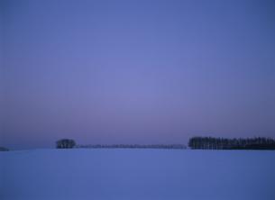 日の出前の並木の写真素材 [FYI03194855]