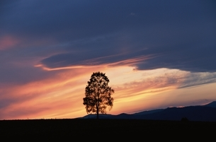 夕焼けと木    北海道の写真素材 [FYI03194885]