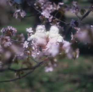 サクラの花と丘の妖精人形 フォトイラスト 旭川郊外 美瑛の写真素材 [FYI03194974]