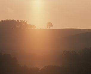 朝霧の丘と木   美瑛町 北海道の写真素材 [FYI03194978]