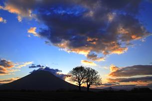 並木と日の出前の羊蹄山の写真素材 [FYI03195193]
